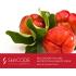 Beautypharma ALGINAT-MASK SKINCODE GENETIC'S REJUVENATION AND NUTRITION Альгинатная питательная лифтинг-маска с экстрактом ацеролы